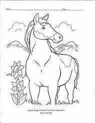 Best Wild Horse Coloring Pages Ideas And Images On Bing Find