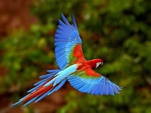 Colourful Flying Bird - HD Wallpapers  Bird