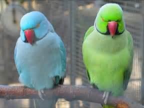 loving coloured bird birds animals background