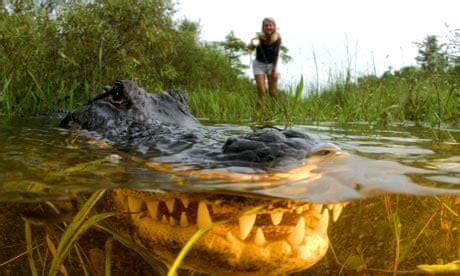 Everglades Boats Pictures by Top 10 Activities In The Florida Everglades Travel The