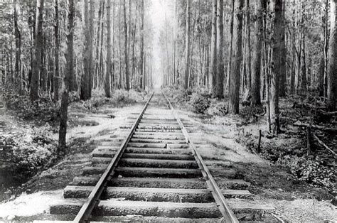 logging train tracks  vilas county train tracks