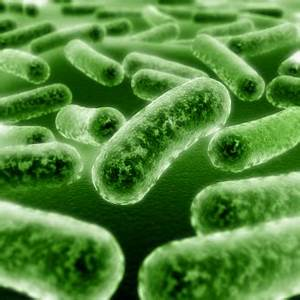 Good vs. Bad Bacteria – How To Maintain Balance In Your ...