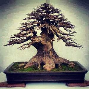 bonsai mnchen taiwan bonsai bonsai with bonsai mnchen With garten planen mit bonsai 1000 years old