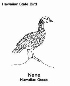92 Nene Bird Coloring Page Backyard Pages Free Printable Pagearizona State