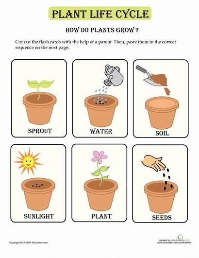 Plant Cycle Lesson Plan Plants Grow Education