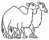 Camel Coloring Pages Printable sketch template