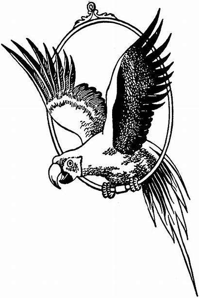 Coloring Pages Parrot Macaw Flying Drawing Parrots