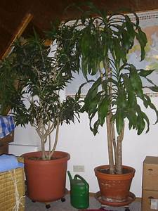 Pflanzen Im Treppenhaus : gro pflanzen b ropflanzen wintergarten hohe r ume in weil der stadt pflanzen kaufen und ~ Orissabook.com Haus und Dekorationen