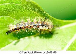 Stock of Bright caterpillar on green ve ables