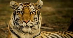 Animali, Wwf, Perso, Il, 68, Delle, Specie, In, 46, Anni