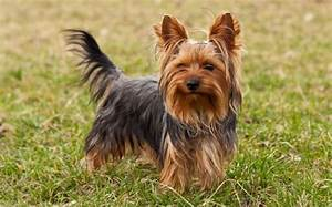 Top 10 Smallest Dog Breeds in the World - PEI Magazine