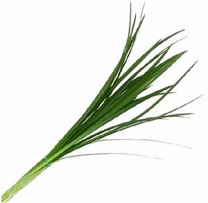 Wedding Flowers - Wholesale Lily Grass