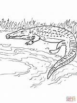 River Crocodile Coloring Nile Pages Bank Drawing Simple Printable Alligator Caiman Getdrawings Getcolorings Clipart Cartoons Categories sketch template