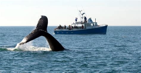 First Rate Whale Watching Hotel Package  Cape Cod