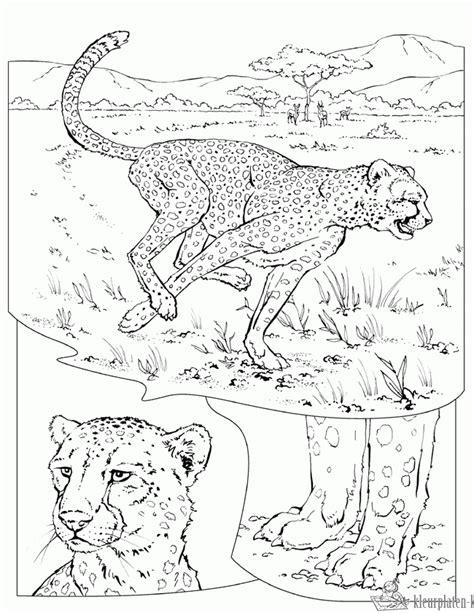 Kleurplaat De Natuur by Kleurplaten Natuur Kleurplaten Kleurplaat Nl