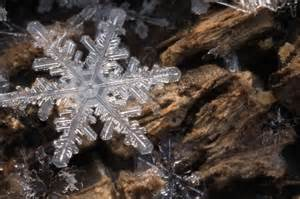 real snow flake photography karla jean booth