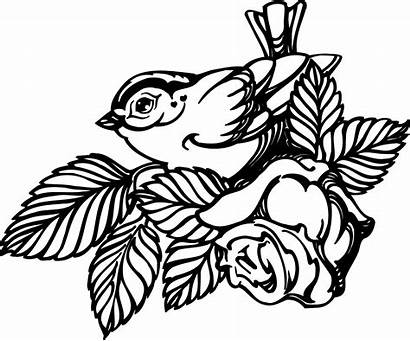 Rose Drawing Bird Pattern Leaves Flower Printable