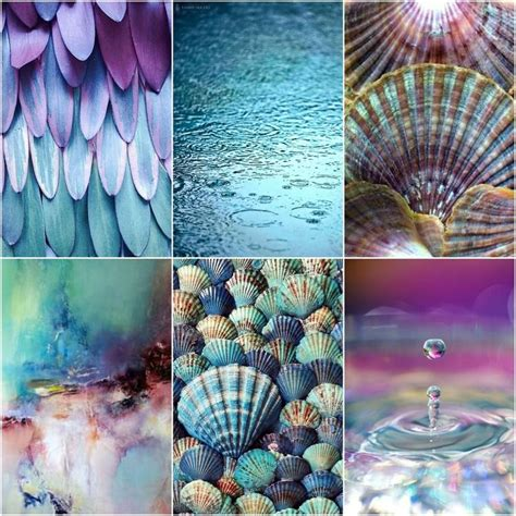 color mood board raindrops feathers water scallop