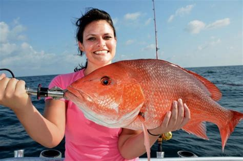 snapper right cast orange gulf reel headboat federally permitted anglers participating collaborative lines board through