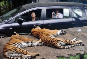 wisata  belantara taman safari bogor tempat wisata