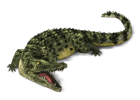 crocodile gif find  gifer