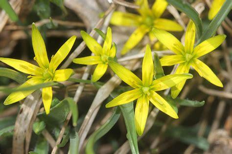 sukkulenten repräsentative arten wasser pflanzen arten angebotsschwerpunkte sumpfpflanzen wassertropfen pflanzen wasser tropfen