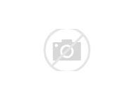 Black Tupelo Fall Color