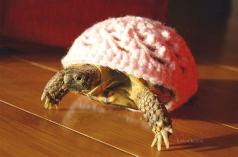 turtle sweaters crocheted tortoise turtle cozies