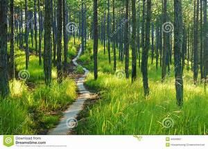 Beautiful Vietnam Landscape, Dalat Pine Jungle Stock Photo ...
