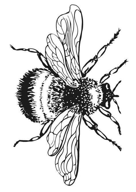 bumble bee coloring pages bumble bee coloring pictures
