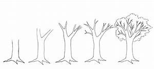 How to Draw a Tree - Dr. Odd