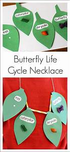 Butterfly life cycle, Life cycles and Butterflies on Pinterest