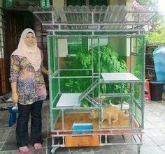 unhappy neighbors what to do about our cat cat furrniture outdoor cats cat cages cat