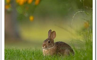 Rabbit Wallpapers Bunny Inside Rossy Posted Am