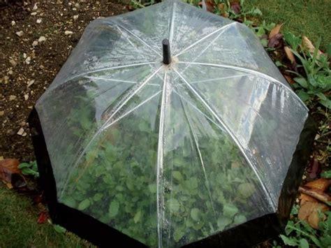 best 20 small greenhouse ideas on diy