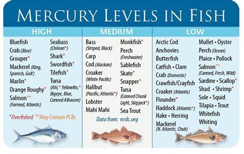mercury fish seafood levels pregnant pregnancy foods avoid docs according brain should developing harmful reels reporters clickbait readers pr dry