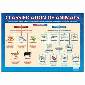 Animal Classification | TED-Ed