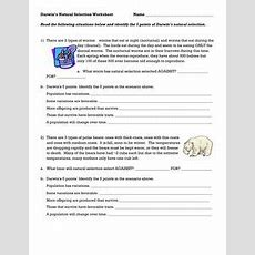 Darwin's Natural Selection Worksheet Answers  School  Worksheets, Natural Selection, Darwin