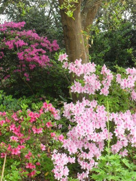 bushes for shade flowering shrubs for shade gardens hgtv
