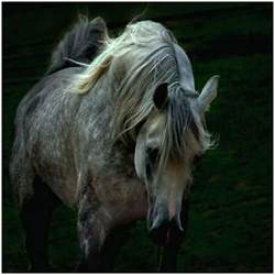 Arabian Horse Photography images