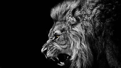 Lion Desktop Mountain Os Screensavers