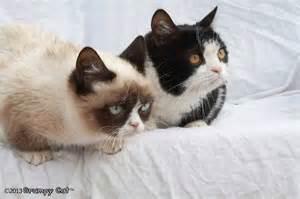 cat tartar tartar sauce and pokey grumpy cat picture