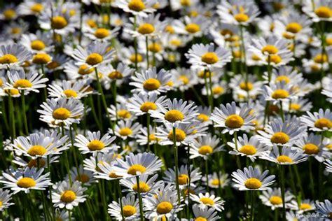 Pflanzen Für Sonnige Standorte by Pflanzen F 252 R Sonnige Standorte Garten Und Freizeit