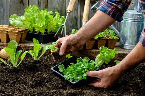 Carefree Lawn Center How To Plan A Vegetable Garden