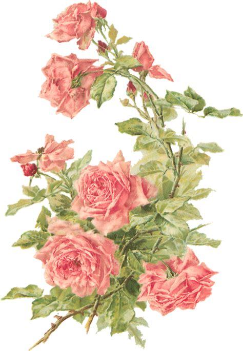 Catherine Klein Peach Roses Digital Elements Wings of