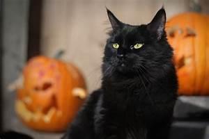 Black Cat Month - the Perils of Halloween