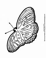 Pages Colouring Coloring Moth Printable Sheets sketch template