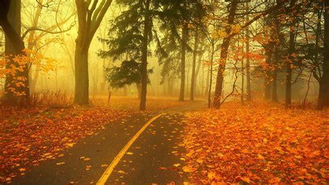 Autumn Wallpaper by In The Autumn Park Wallpaper Wallpaper Wide Hd