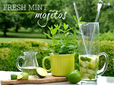 mojito wallpapers images  pictures backgrounds