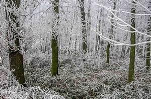 Traditionen In Deutschland : waldm nnchentag und schl gelstag in deutschland 2 januar ~ Orissabook.com Haus und Dekorationen